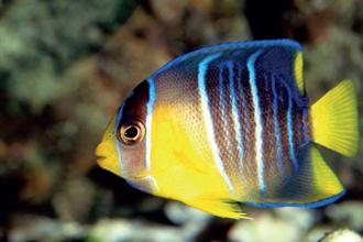 anteprima-ocean-acquari